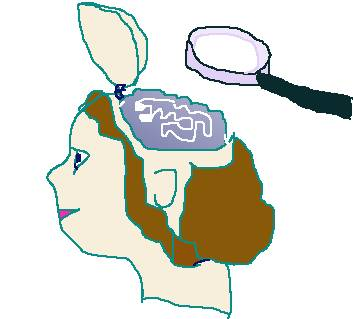 Hersenkrimp En SPMS