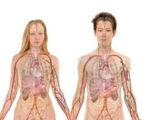 MS en orgaandonatie?