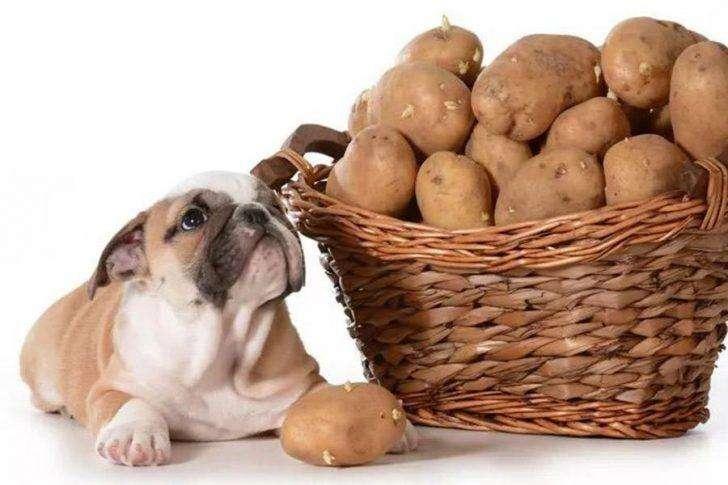 hulphond aardappelen