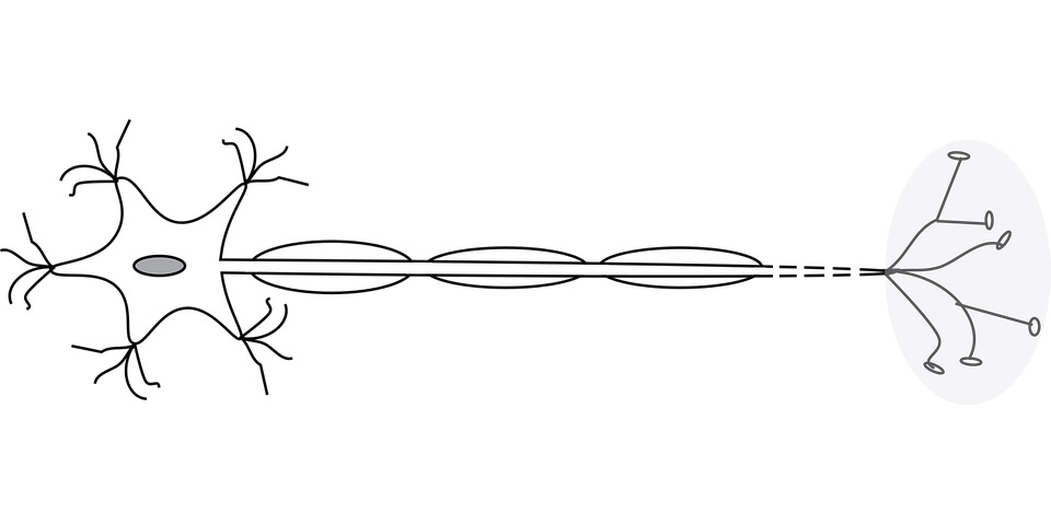 Middel in beeld voor myelineherstel